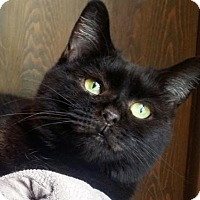 Adopt A Pet :: Rosalyn - Johnson City, TN