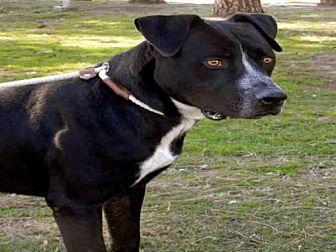 Labrador Retriever Mix Dog for adoption in Upland, California - HOOEY