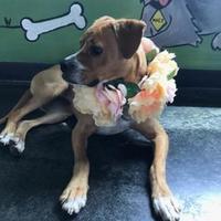 Adopt A Pet :: Annabelle - Memphis, TN