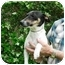 Photo 2 - Fox Terrier (Smooth) Mix Dog for adoption in Kingwood, Texas - FOXY
