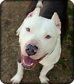 Terrier (Unknown Type, Medium) Mix Dog for adoption in Fort Worth, Texas - Roscoe