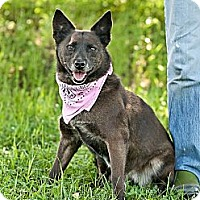 Adopt A Pet :: Foxy - Carencro, LA