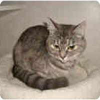 Adopt A Pet :: June - Shelton, WA