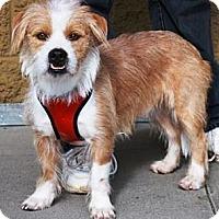 Adopt A Pet :: Grover - Gilbert, AZ