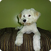 Adopt A Pet :: Sadie- I am great with dogs! - Redondo Beach, CA