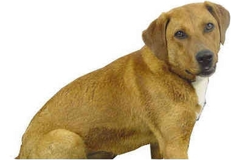 Labrador Retriever Mix Dog for adoption in Lake Odessa, Michigan - Jenna