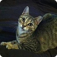Adopt A Pet :: Miss Poppy - Alexandria, VA