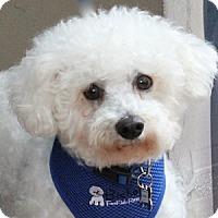 Adopt A Pet :: Georgie - La Costa, CA