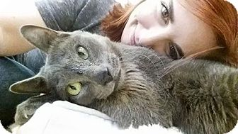Domestic Shorthair Cat for adoption in Houston, Texas - Peanut