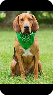 Hound (Unknown Type) Mix Dog for adoption in Broken Arrow, Oklahoma - Huck