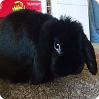 Adopt A Pet :: Lancelot - Conshohocken, PA