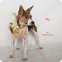 Adopt A Pet :: Mary - Riverside, CA