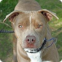 Adopt A Pet :: Rhino - Joliet, IL