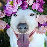 Adopt A Pet :: Phoebe - Yuba City, CA