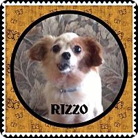 Adopt A Pet :: Rizzo - Santa Barbara, CA