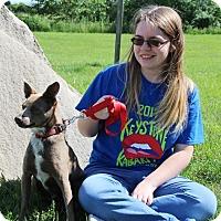 Adopt A Pet :: Romeo - Elyria, OH