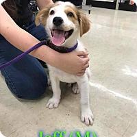 Adopt A Pet :: Jeff - Pensacola, FL
