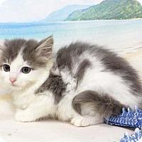 Adopt A Pet :: Garen - Harrisonburg, VA