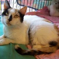 Adopt A Pet :: Vivian - Westville, IN