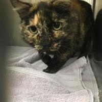 Adopt A Pet :: Lyra - Edmonton, AB