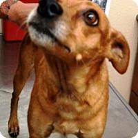 Adopt A Pet :: Ms Grasshopper - Casa Grande, AZ