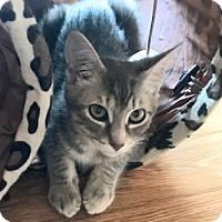 Adopt A Pet :: Turtle 2 - Bulverde, TX