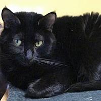 Adopt A Pet :: Boo - Auburn, CA