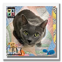 Adopt A Pet :: Max - Palm Desert, CA