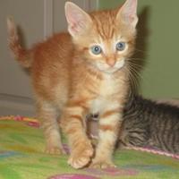 Adopt A Pet :: El Paso - Richmond, VA
