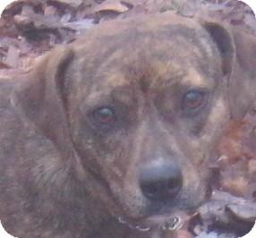 Hound (Unknown Type) Mix Dog for adoption in Hillsboro, Ohio - Sissy
