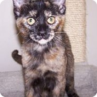 Adopt A Pet :: K-Amelia5-Tawny - Colorado Springs, CO