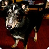 Adopt A Pet :: Iggy Pop - Hastings, NY