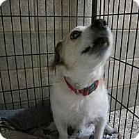 Adopt A Pet :: Annie - Rhinebeck, NY