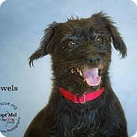 Adopt A Pet :: Jewels - Phoenix, AZ