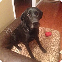 Adopt A Pet :: Gromit - Knoxville, TN