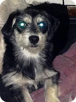 Terrier (Unknown Type, Medium) Mix Dog for adoption in Dover, Tennessee - Molly