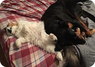 Domestic Longhair Kitten for adoption in Proctorville, Ohio, Ohio - FunnyFace