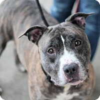 Adopt A Pet :: Zeus - Manahawkin, NJ