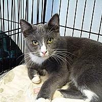 Adopt A Pet :: Smokey - Cottonport, LA