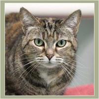 Adopt A Pet :: Daffy - Batavia, OH
