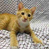 Adopt A Pet :: Fluffernutter - Fayetteville, TN