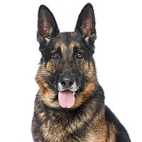 Adopt A Pet :: CORONADO - Glendale, CA