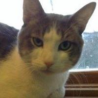 Adopt A Pet :: Bruno Mars - $20 - Brimfield, MA