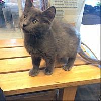 Adopt A Pet :: Patrick - Lakewood, CA