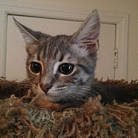Adopt A Pet :: CASHEW - Clayton, NJ