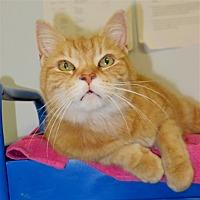 Adopt A Pet :: Blossom - Indiana, PA