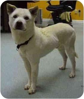 Kishu Mix Dog for adoption in Guelph, Ontario - JoJo