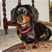 Adopt A Pet :: Sizzles - Bryan, TX