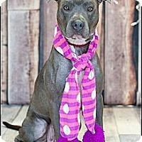 Adopt A Pet :: Junie - Hilliard, OH