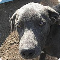 Adopt A Pet :: Walter #5202 - Jerome, ID